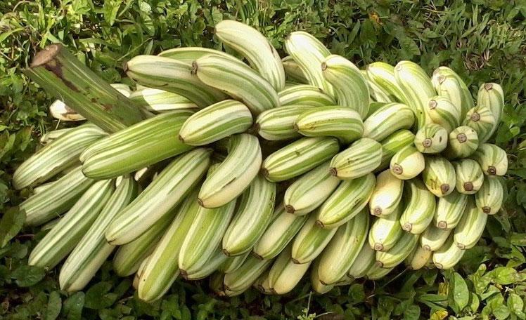 бананы сорта в картинках теперь