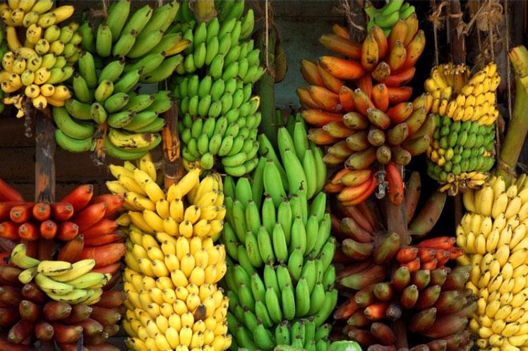 сверкает бананы сорта в картинках часть обновлений сосредоточена
