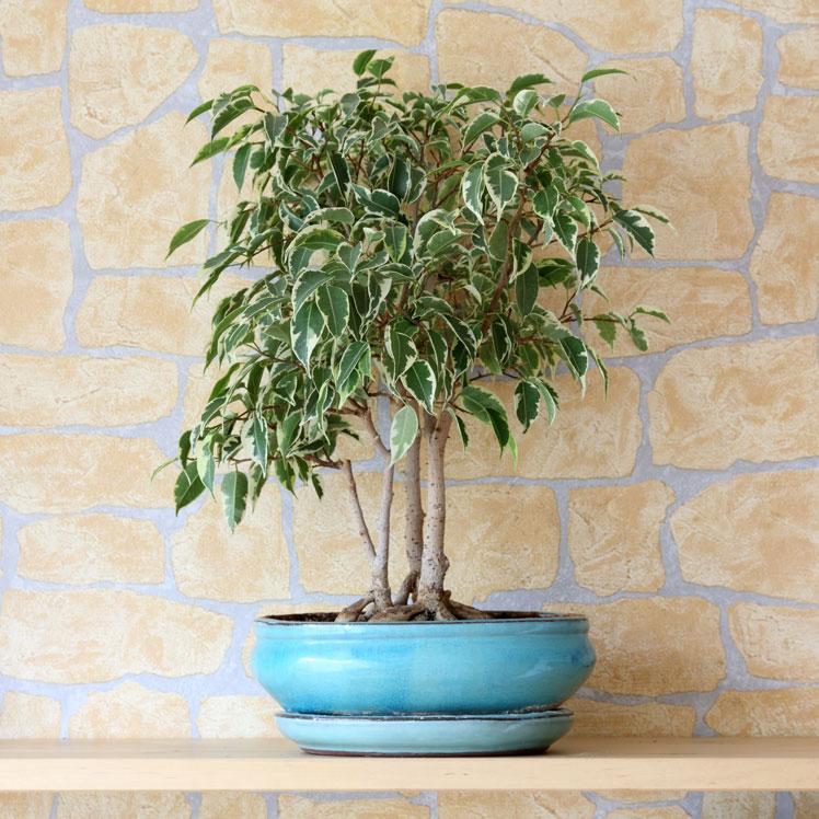 Комнатные растения, которым не место в детской
