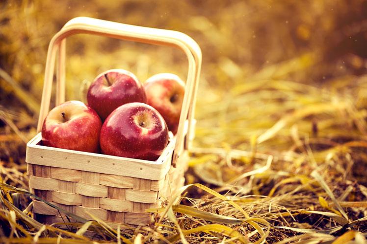 Интересные факты о яблоке фото