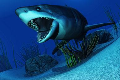 Распространённые мифы об акулах
